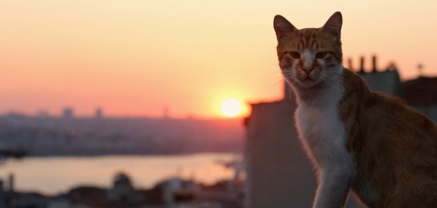 The Eternal Mystique of Cats: Kedi (2016)